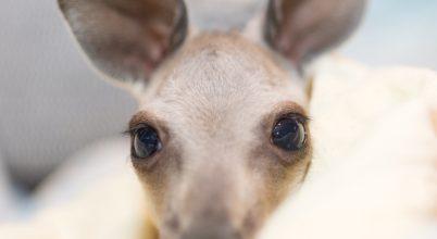Így zajlik az élet egy ausztrál állatmenhelyen