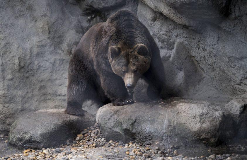 A medve nem látta meg árnyékát, nem lesz hosszú a tél