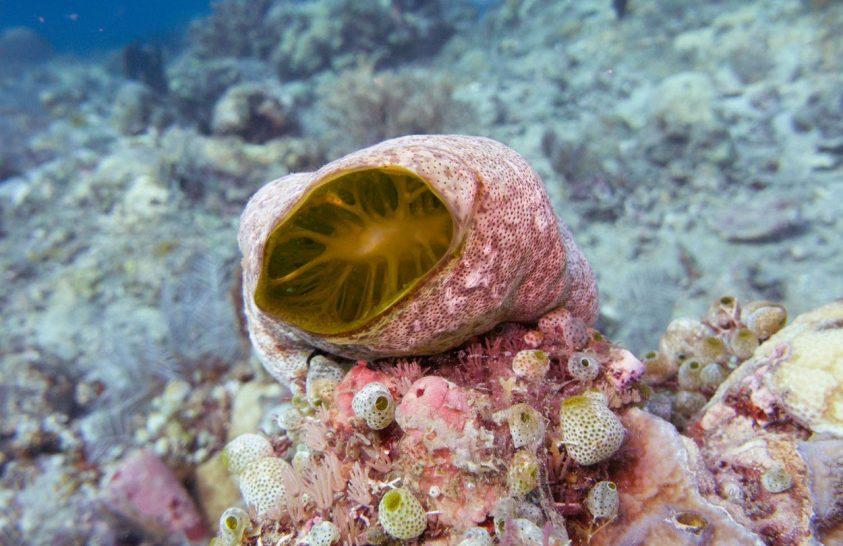 Zsákállatok segíthetnek felmérni az óceánok műanyagszennyezettségét