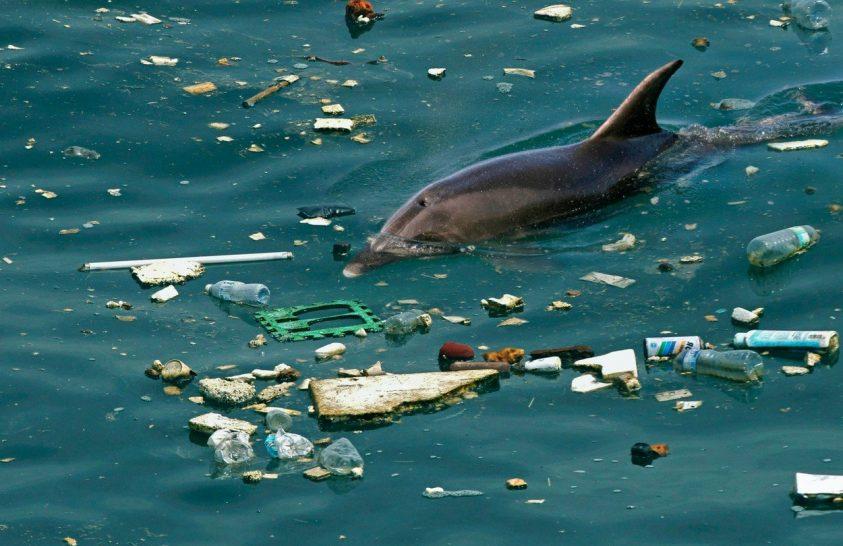 A tengeri emlősök nem menekülhetnek a műanyag elől