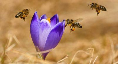 Alapvető matematikai feladatok megoldására képesek a méhek