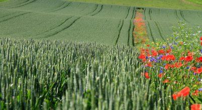 Színpompás vadvirágok a fenntartható mezőgazdaság szolgálatában