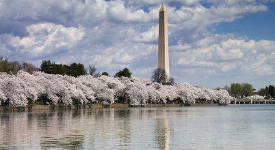 Klímajelző cseresznyevirágzás