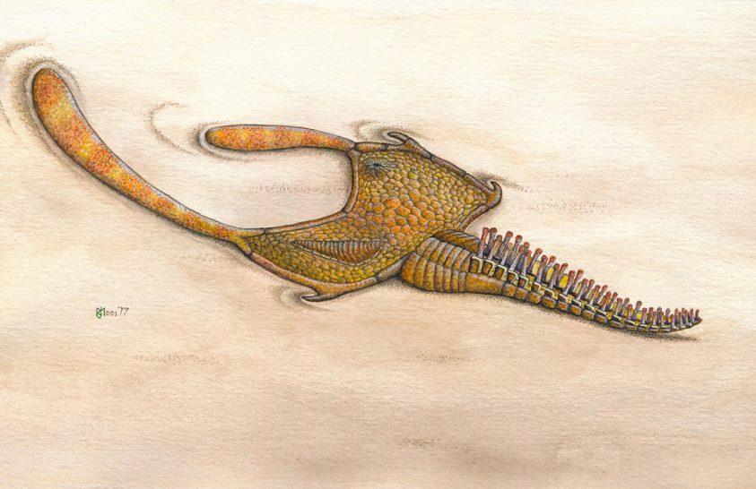 A tengerisünök 500 millió éves unokatestvérei