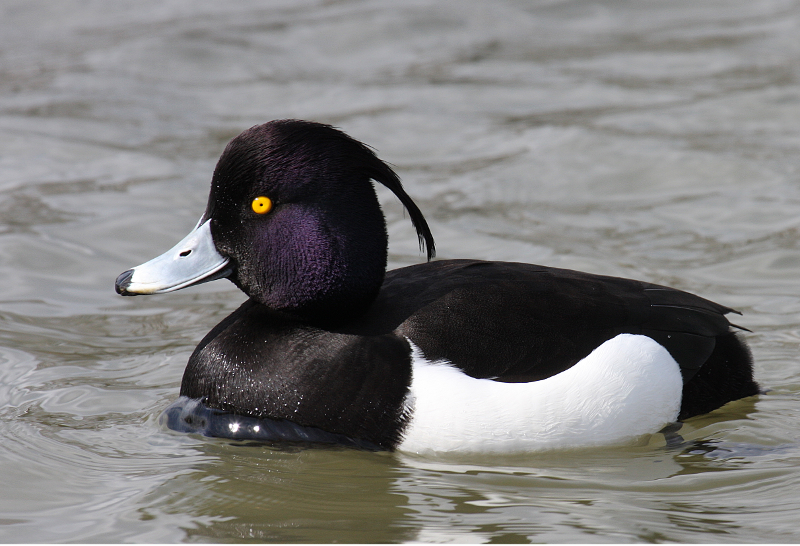 Változások az északi madarak életében