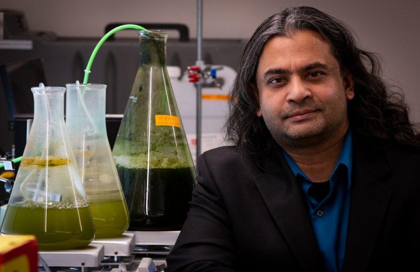 Új módszer az alga-alapú bioüzemanyag kinyerésére
