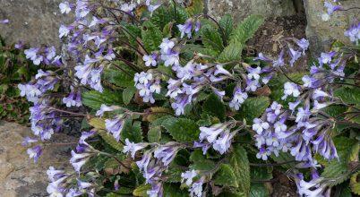 Fény derült a kiszáradást tűrő növények titkaira