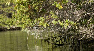 Invazív fajok fenyegetik a Galápagos-szigeteket