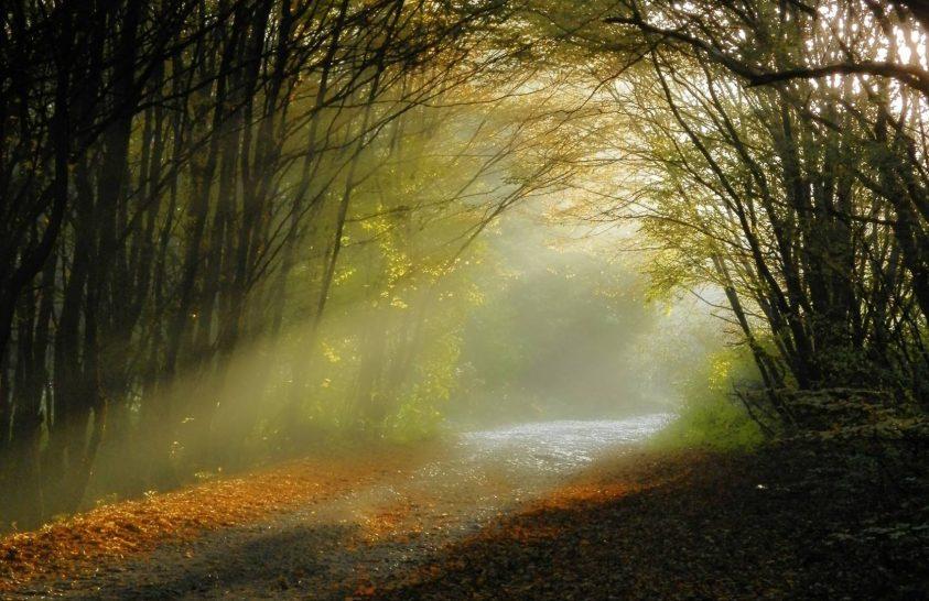 Megmerítkezni az erdőben