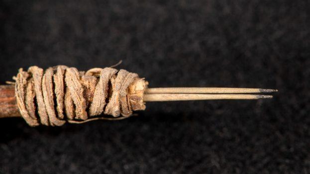 2000 éve kaktusztüskével tetováltak Észak-Amerikában