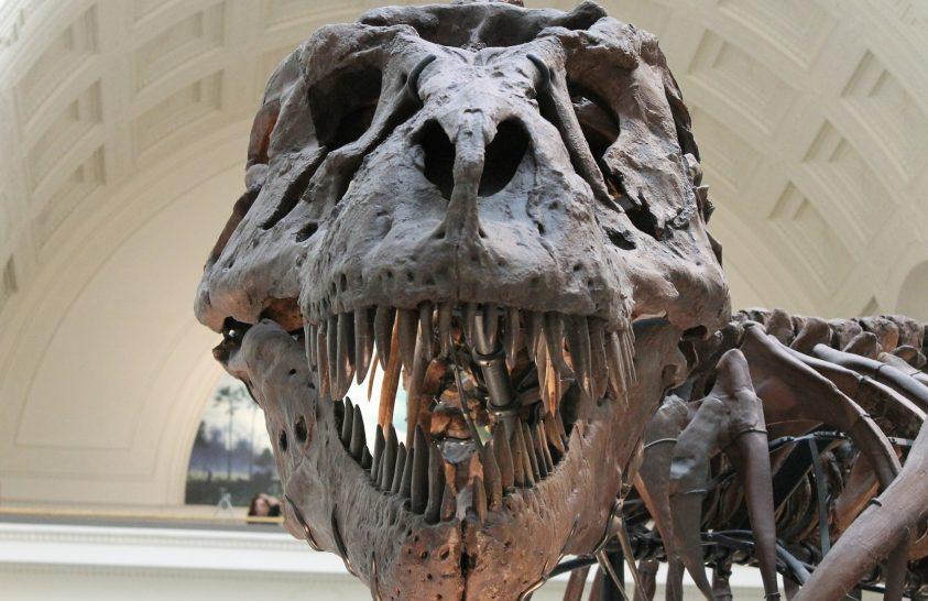 Felfedezték a legnagyobb T. rexet