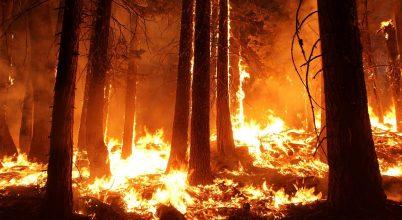 Egyre gyakoribbak lesznek a pusztító erdőtüzek