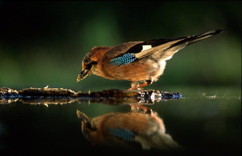 Gondolatok a természetről és a fotózásról