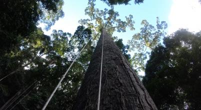 Rekorder fát azonosítottak