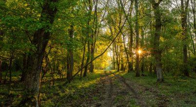 Napkelte a Gemenci erdőben
