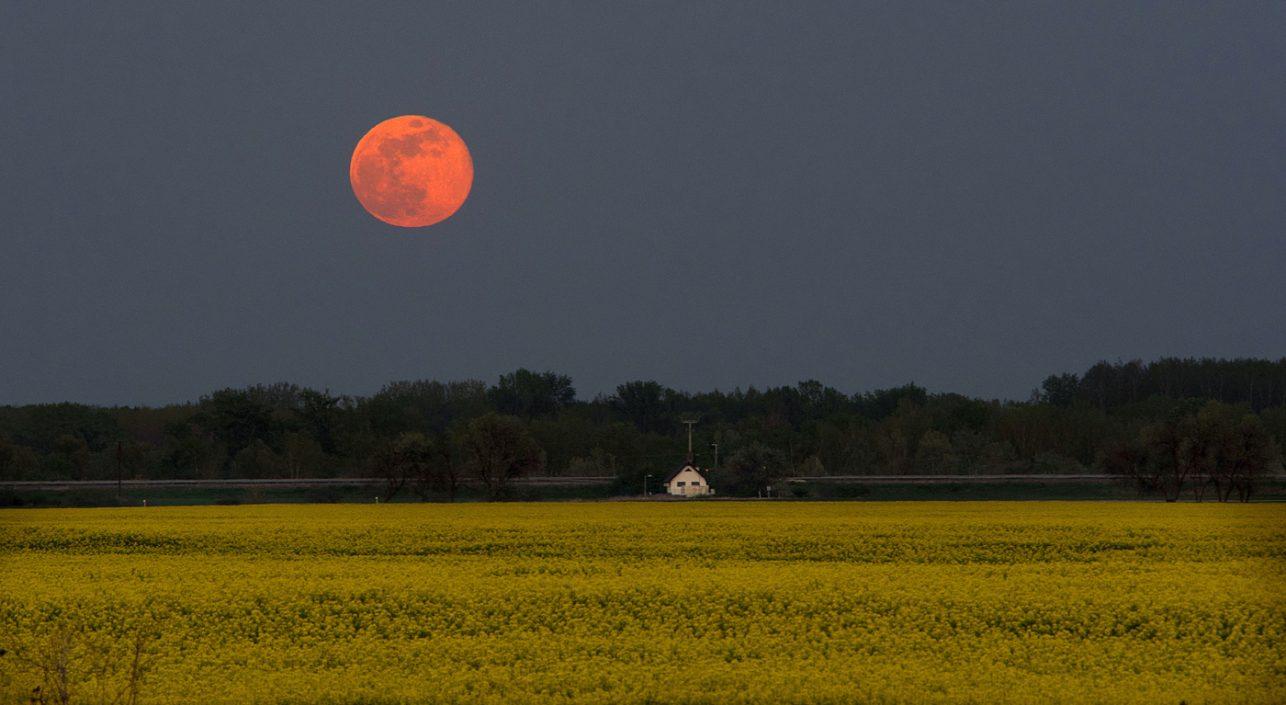 A nap képe: Repce holdvilágban