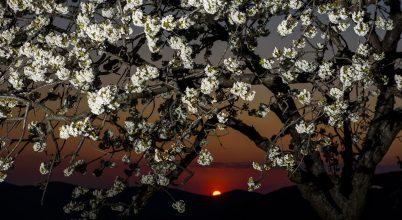 Áprilisi virágeső