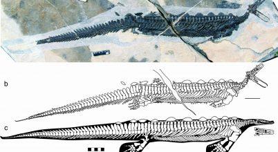 Egy bizarr tengeri őshüllő koponyájára bukkantak
