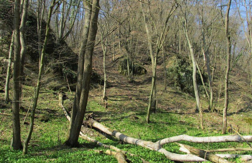 Tavaszi túra hazánk érintetlen őserdejében
