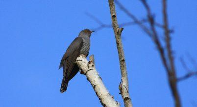A természet egy leleményes madara
