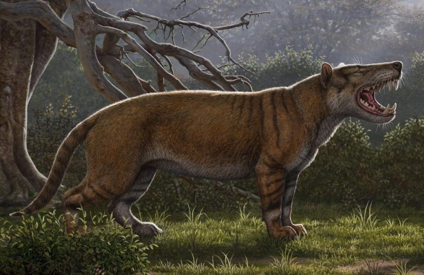 A jegesmedvénél is hatalmasabb volt az ősi ragadozó