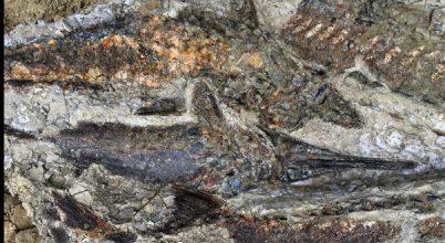 Kivételes leleteket találtak a 66 millió éves becsapódás korából