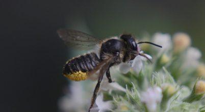 Hogyan segítsük a méheket a kertünkben?