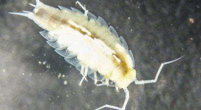 Új rákfajt fedeztek fel az űrhajósok