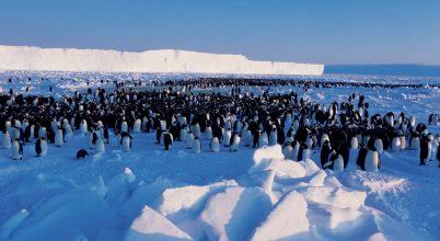 Hogyan tűnt el egy pingvinkolóna pár évvel ezelőtt?