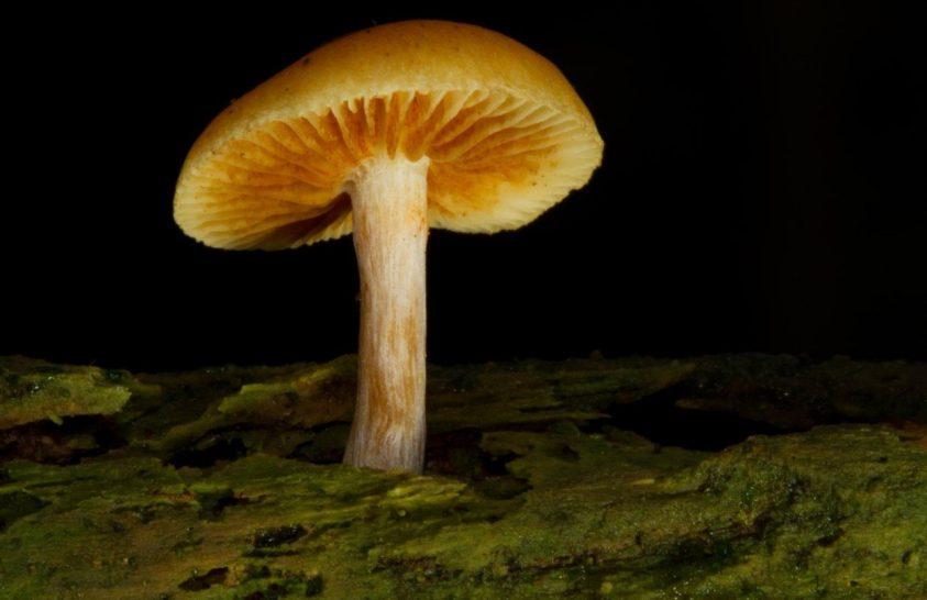 A gombáknál nincs jele a dinoszauruszok kihalásához vezető eseménynek