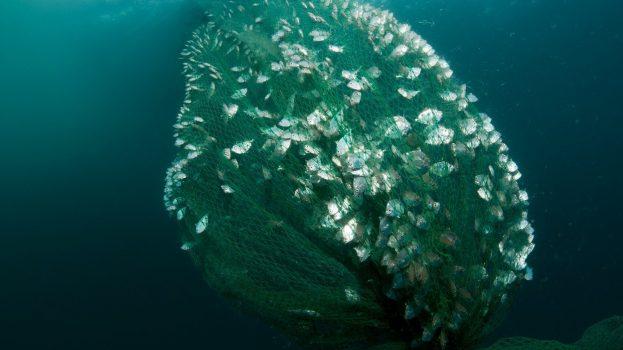 Hálózatelemzésel a fenntartható halászatért
