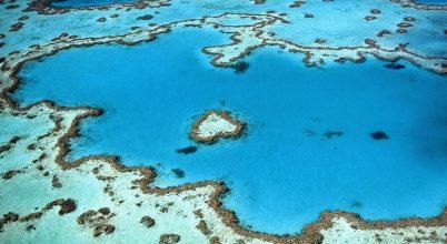 Guanó segíti a korallok növekedését