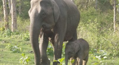 Érdemes lenne újragondolni a veszélyeztetett faj fogalmát!