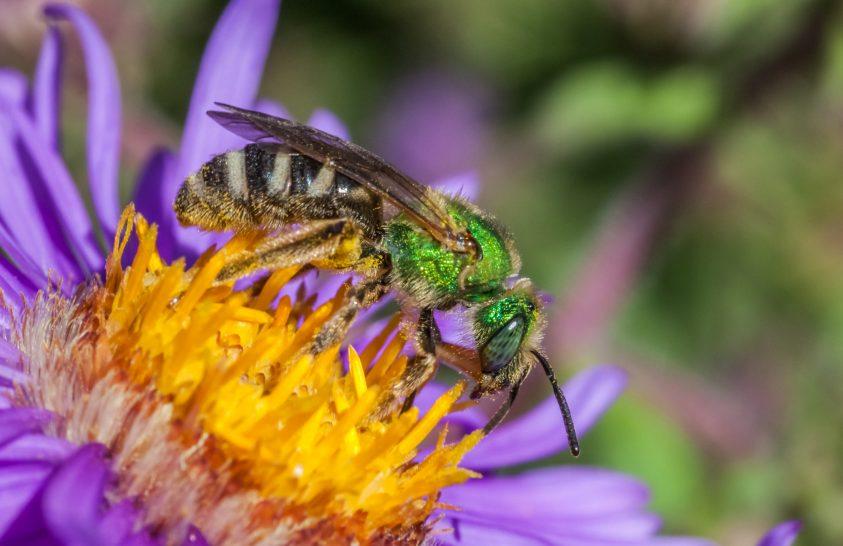 A beporzó rovaroknak szükségük van védelemre!