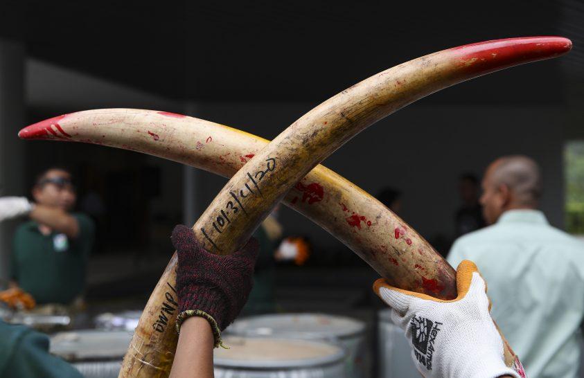 Lefoglalt elefántcsont-szállítmány