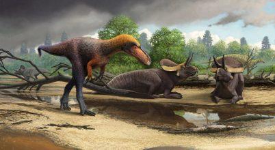 Új-Mexikóban élt a T. rex törpe rokona