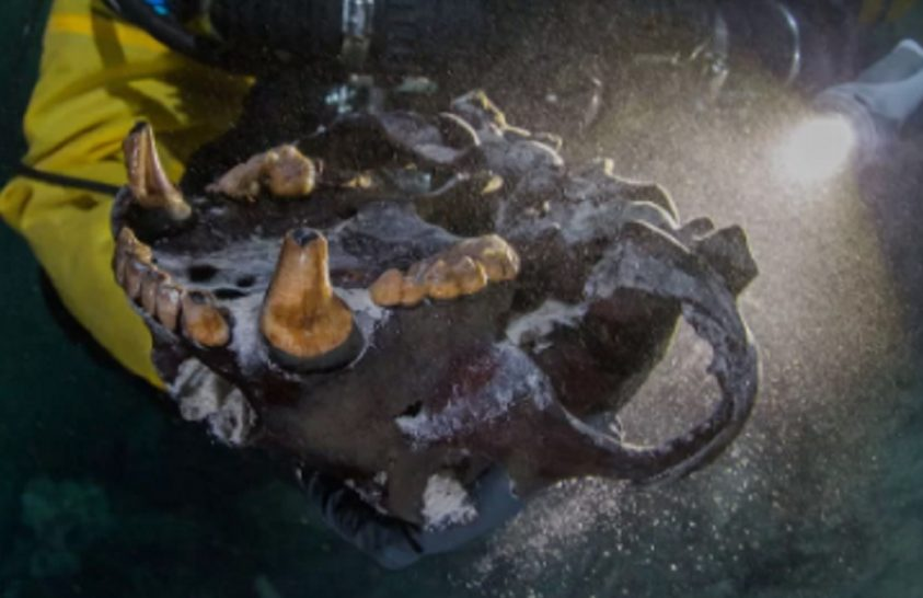 Hogyan került egy ősi medvekoponya egy elárasztott barlang mélyére?