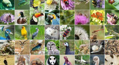 Egy nap a biodiverzitás jegyében