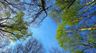 Diákok segítségével óvják az erdőket a Fülöp-szigeteken