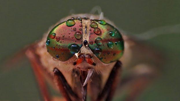 A nap képe: Egy bögöly szeme