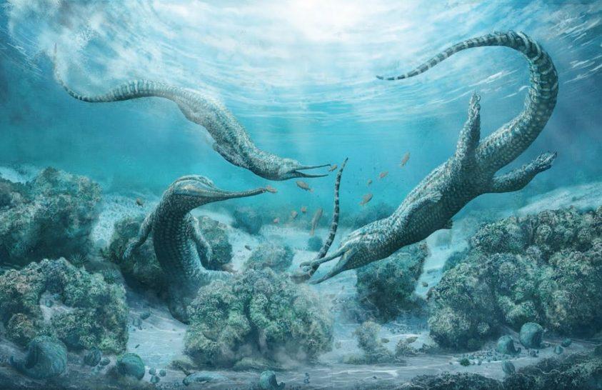 Krokodilra hasonlított a hatalmas tengeri őshüllő