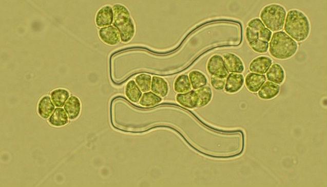 Mégis van rá mód, hogy algákkal termeljünk tiszta hidrogént