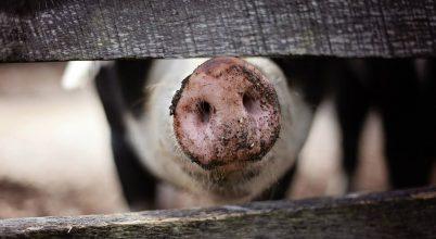 Súlyos járvány az állatvilágban