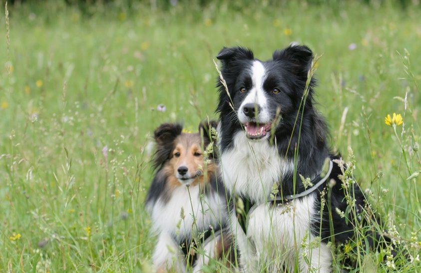 A kutya a gazdája stressz-szintjét tükrözi