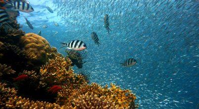 Ez a korallzátony valahogy képes ellenállni a pusztításnak