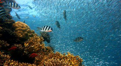 Félmillió korall pusztult el egy kotrás miatt