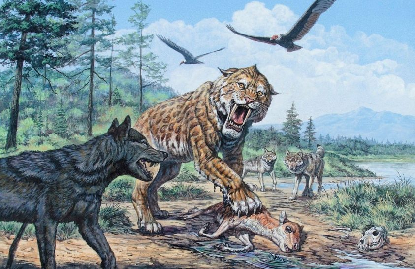 Újabb mumifikálódott ősemlősökre bukkantak Szibériában