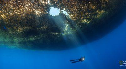 Az Atlanti-óceánt tápláló moszat rejtelmei