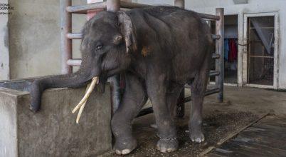 Az állatokat látjuk, a szenvedésüket nem