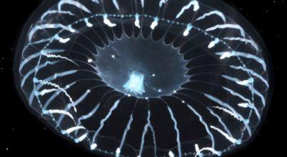 Eddig ismeretlen fénykibocsátó fehérjéket fedeztek fel